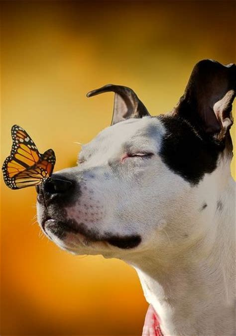 dog  butterfly   nose luvbat