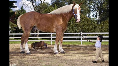 horse tallest jake horses worlds record guinness holder