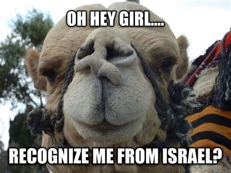 Camel Memes - funny camel askideas com