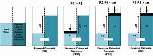 File Osmotic Processes Diagram Jpg