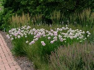 Allium Pflanzen Im Frühjahr : allium summer beauty 50 cm juli aug tuin bepflanzung kleine g rten en pflanzen ~ Yasmunasinghe.com Haus und Dekorationen