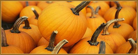 Varieties Of Pumpkins In Australia by How To Carve A Pumpkin