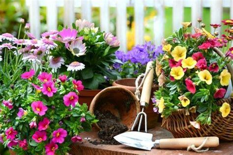 sauge en cuisine plantes vertes fleuries aménagement de jardin joué lès
