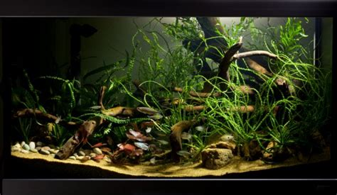 How to set up an African biotope aquarium — Practical