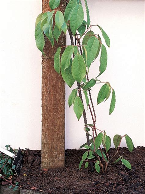 How To Choose And Maintain Climbing Plants Diy