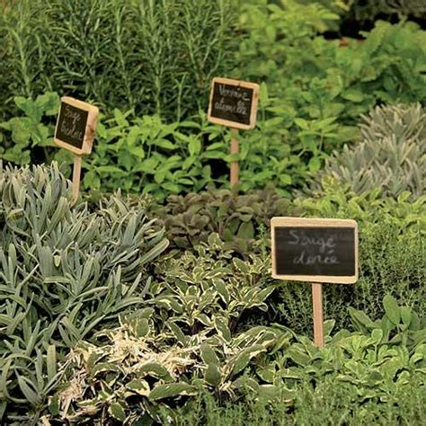 herbes aromatiques en cuisine les herbes aromatiques bio en cuisine 224 marseille