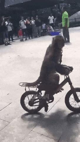 bike fails  gifs