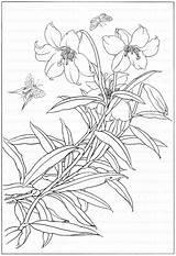 Flowers Coloring Lily Adult Colouring Adults Line Oriental Wash Ink Drawing Flower sketch template