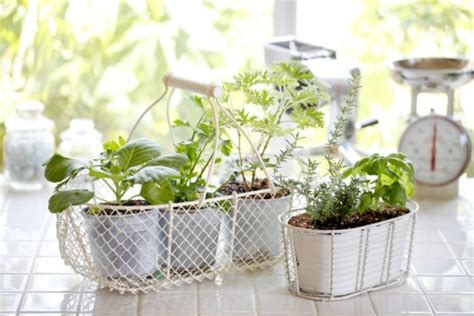 Herb Garden Indoor : 10 Simple Secrets For A Successful Indoor Herb Garden