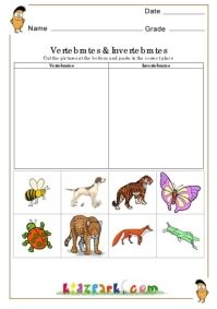 vertebrates  invertebrates worksheetsevs worksheets