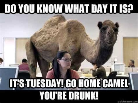 Tuesday Memes Funny - 46 best images about tuesday on pinterest tuesday quotes happy tuesday and tuesday humor