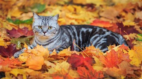 Fall Wallpaper With Animals - leaves fall animals cat wallpapers hd desktop and