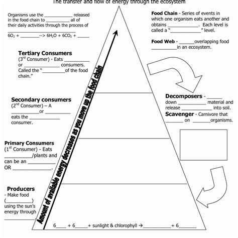 Energy Through An Ecosystem Worksheet Answers  Worksheet Resume