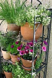 Ameisen Im Gemüsebeet : gartentipps f r garten balkon und terrasse ~ Whattoseeinmadrid.com Haus und Dekorationen