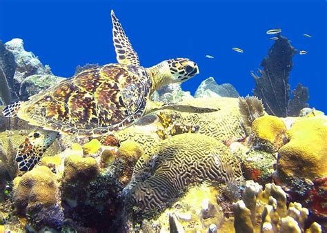 Sea Animals Wallpapers Free - qq wallpapers sea animal turtle free wallpapers