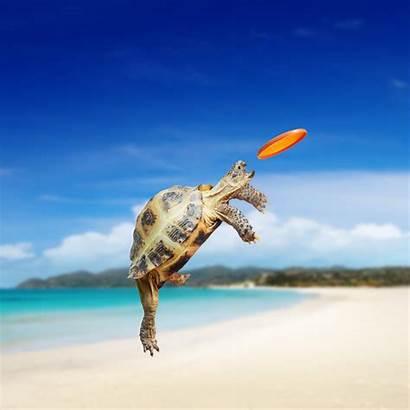 Turtle Wallpapers Sea Tortoise Frisbee Bing
