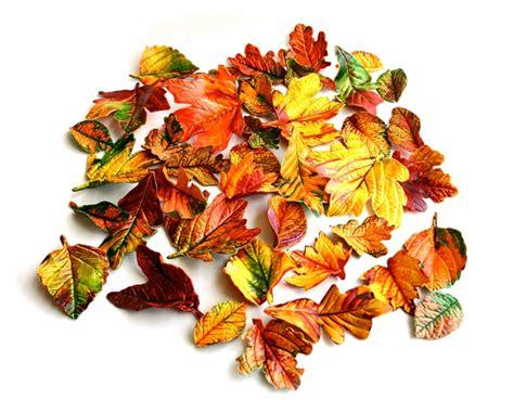 edible fall leaves 10 fantastic fall favors