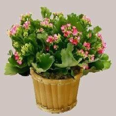 Plante Fleurie Intérieur : plante grasse d interieur fleurie photo de fleur une ~ Premium-room.com Idées de Décoration