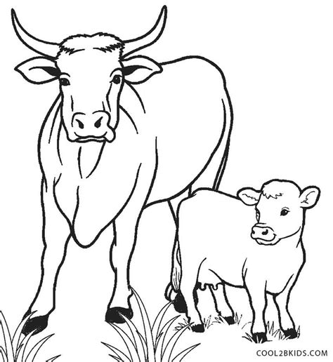 coloring pages    calf coloring page