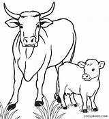 Cow Coloring Calf Cool2bkids Printable sketch template