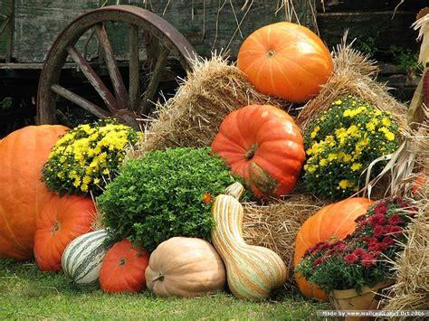 pumpkin gourds fall harvest fall harvest
