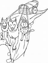 Sled Dog Dogs Coloring Pages Printable Drawing Template Getcolorings Sketch Getdrawings Comments sketch template