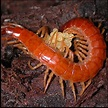 What is an Arthropod - Characteristics and examples of ...