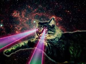 69 curated Laser cat ideas by sandrabiwer | Cats, Space ...
