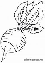 Coloring Radish Vegetables Pages Vegetable Printable Colouring Root Lettuce Fruit Drawings Fastseoguru Turnip Sheets Preschool Line Farm Garden Picolour Coriander sketch template