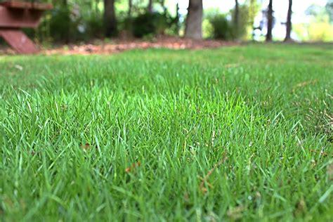 Geo™ Zoysia Shade Tolerant Grass