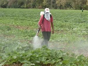 Impulsan el cultivo de alimentos sin agroquímicos