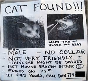 cat found funniest lost found pet signs 12 pics
