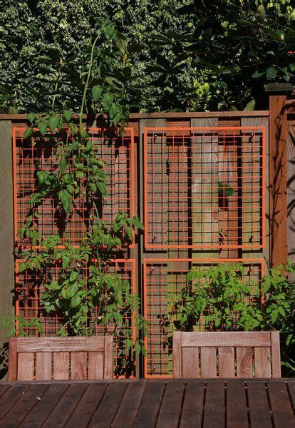 Best Place To Buy Trellis by 41 Best Images About Vertical Trellis Systems On