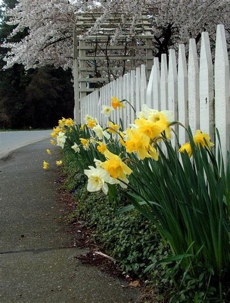 picket fence landscaping 17 best images about picket fence landscaping on pinterest vinyls perennials and flower