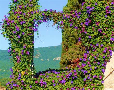 plante et fleur du lac 28 images fleurs et plantes du lac sp 233 cialiste de la jardinerie