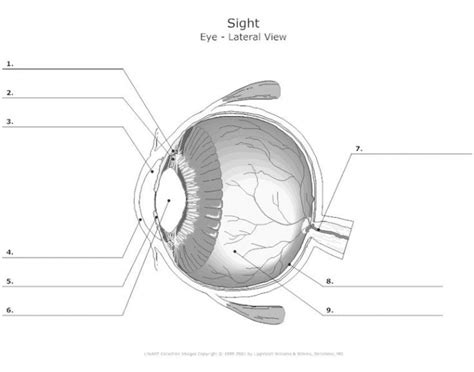 Eye Diagram For Quiz by Correctly Label The Eye Diagram Purposegames