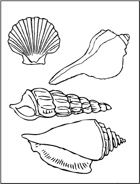 free printable seashell coloring pages for