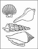 Seashell Coloring Pages Printable sketch template