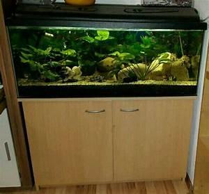 Terrarium Steine Kaufen : deko steine aquarium kleinanzeigen kaufen verkaufen bei ~ Michelbontemps.com Haus und Dekorationen