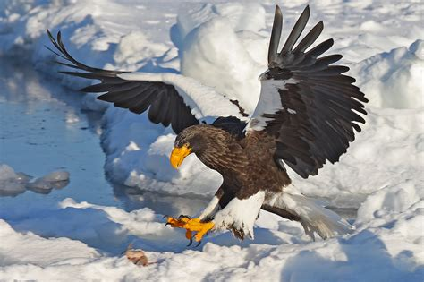 The Steller's Sea Eagle  Pgcps Mess  Reform Sasscer Without Delay