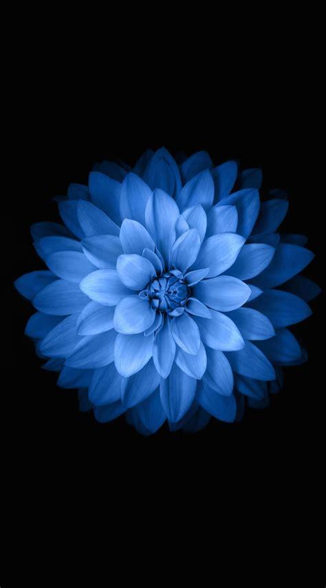 Iphone 6 Flower Wallpaper Hd by Blue Iphone Wallpaper Images Blue Wallpaper