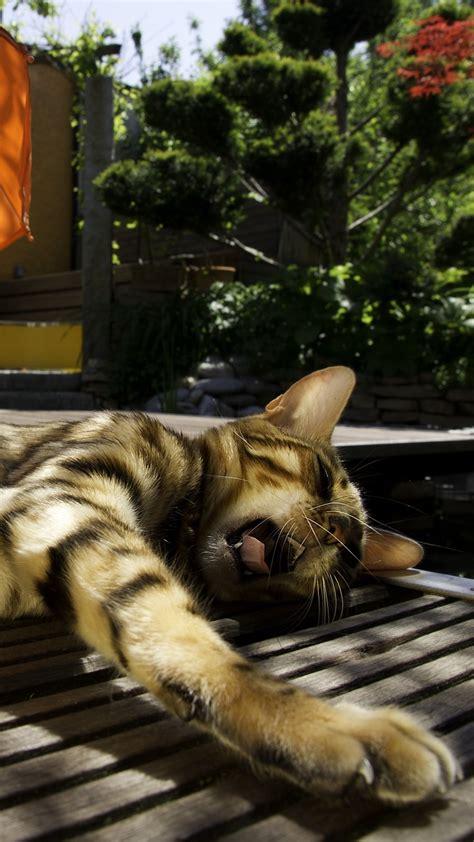 wallpaper cat kitty kitten yawns striped umbrella