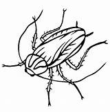 Cockroach Coloring Cockroaches Pages Oggy Drawing Clipart Printable Animals Roach Animal Sheet Thecolor Town Outline Line Pencil Clipartmag Discovery Colouring sketch template