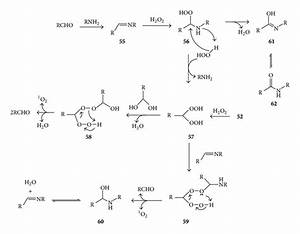 Proposed Mechanisms Of Lysine