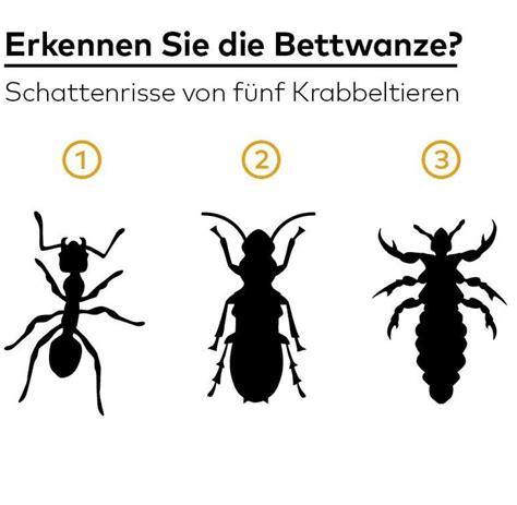 Insekten Im Haus Erkennen by Insekten Im Haus Erkennen Bettwanzen Erkennen Und Bek