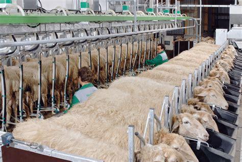 tapis alimentation ovin occasion vial traite westfalia vente mat 233 riel 233 table salle de traite 224 murat cantal auvergne