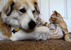 Cute Cat Adorable Dog GIF - Find & Share on GIPHY