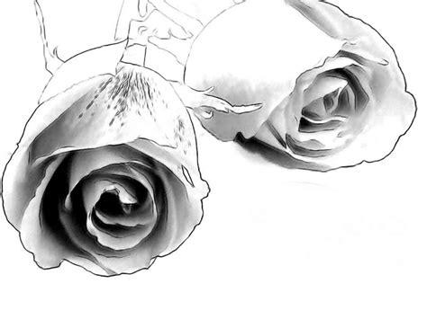 pencil drawings charcoal drawings  art galleries rose