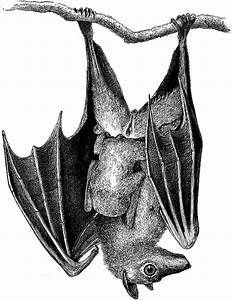 Fruit Bats and Pterosaurs - Media Center