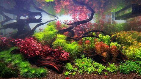 Dutch-inspired Aquarium